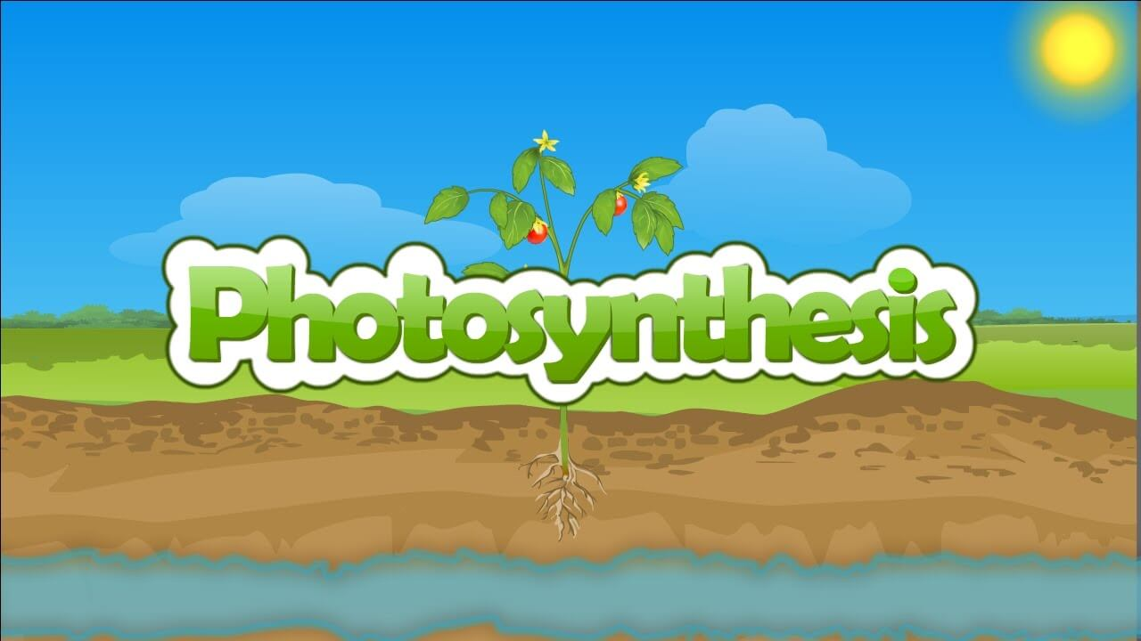 Photosynthesis Process | Formula & Chemical Equations