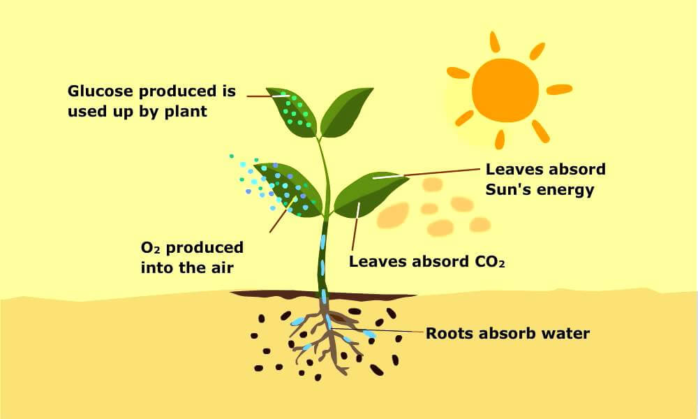 chemical reaction for photosynthesis A chemical reaction is a process that leads to the chemical transformation of one set of chemical substances to another classically,  or photosynthesis driven by absorption of.