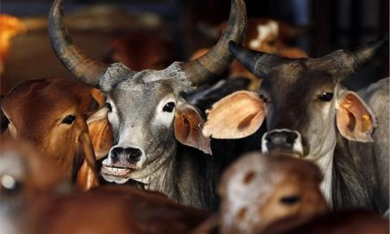 Madras High Court stays Notification on Cattle Trade Ban