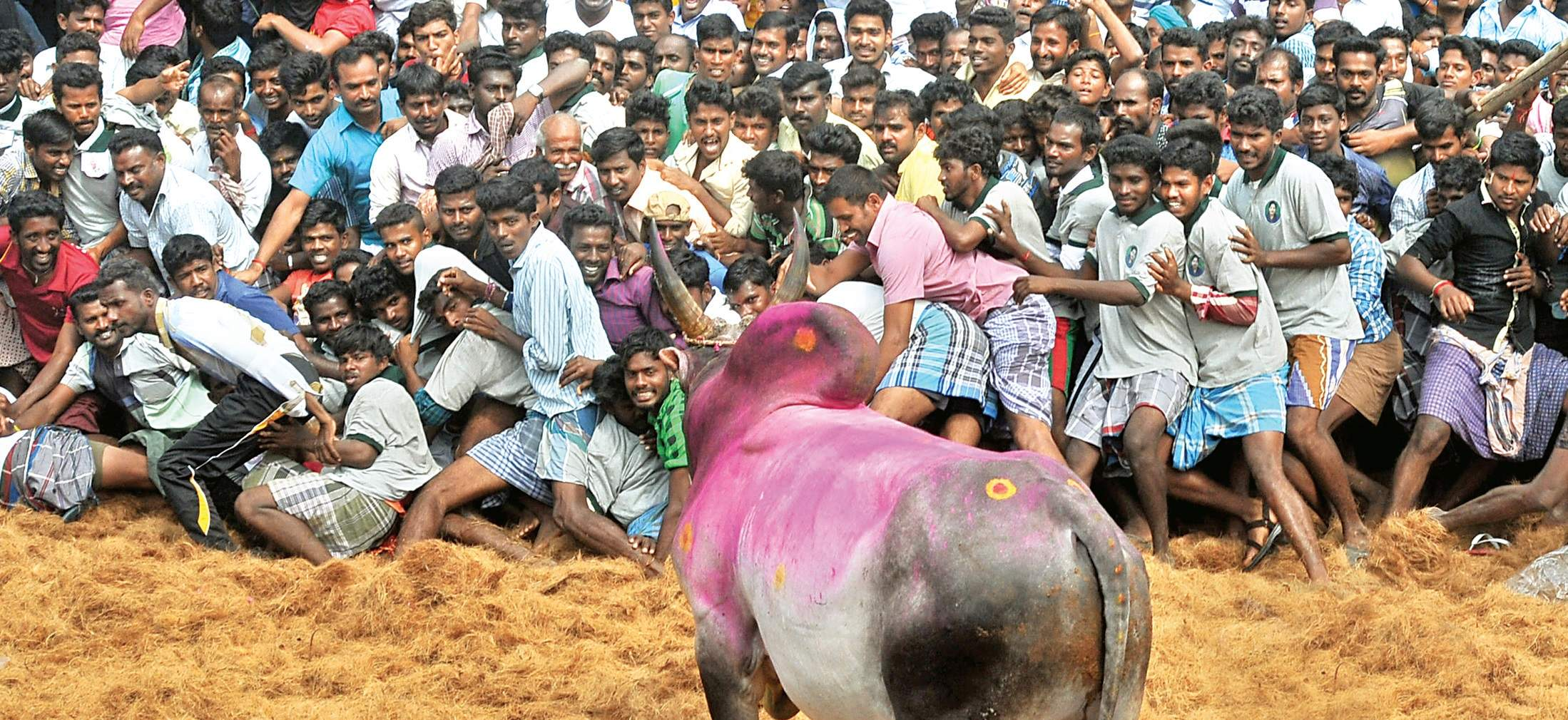 Jallikattu Protest Day