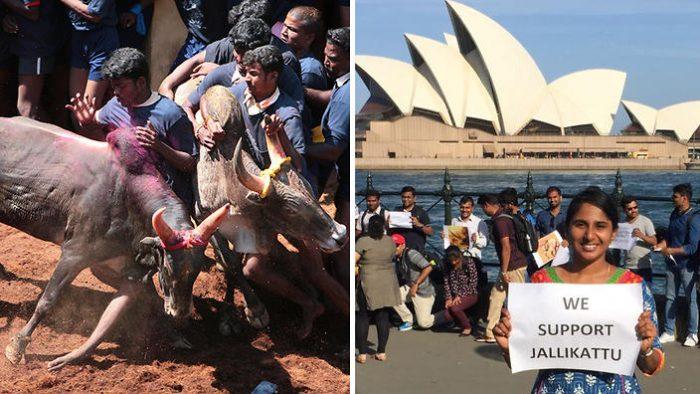 Jallikattu Protest in Sydney