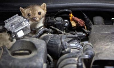 How to Protect Car from Rats