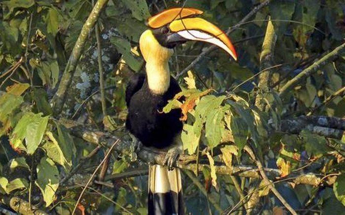 Vezhambal Bird